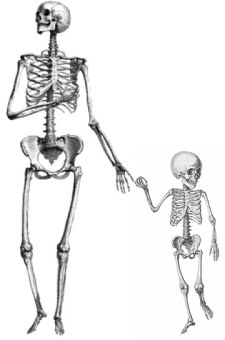Adult-and-child-skeletons